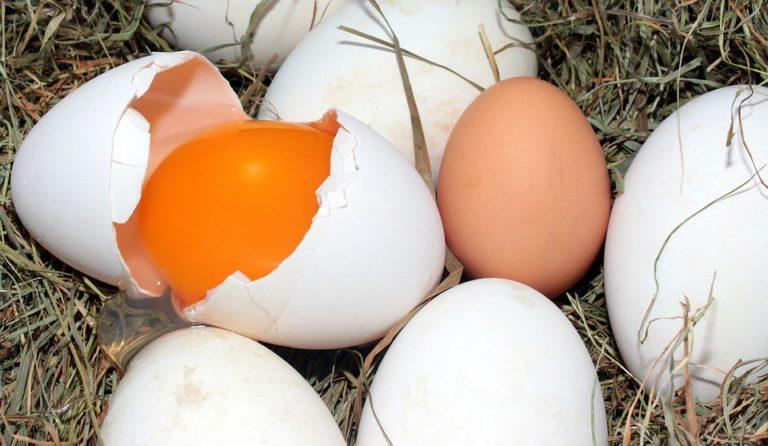 Éttermekbe került rovarirtószeres holland tojás