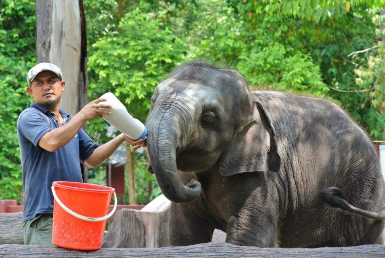 Az Elefántok Nemzetközi Napja
