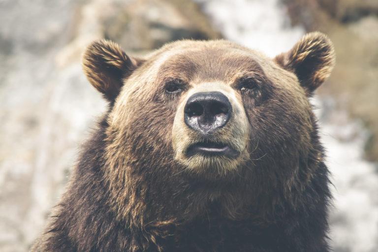 Kutyák mentették meg a medvétől a gazdájukat Székelyföldön
