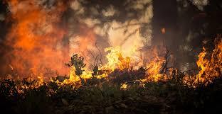 Erdő- és bozóttüzek Kaliforniában