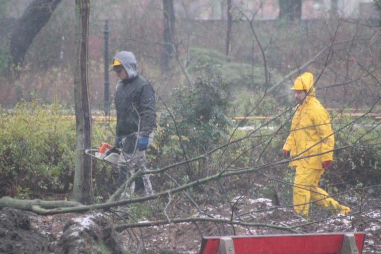 Városliget: újabb 38 fát vágtak ki