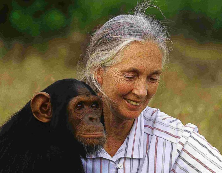 Jane Goodall: nincs sok időnk