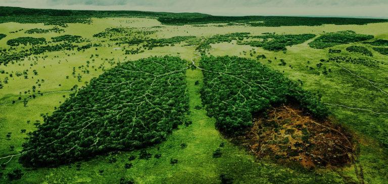 A Jobbik környezetvédelmi öt pontja